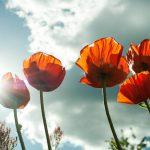 Sparen im Sommer – Erfrischend und einfach